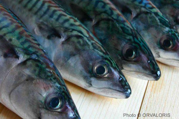têtes de petits poissons bleus publié dans le Malin Gourmand