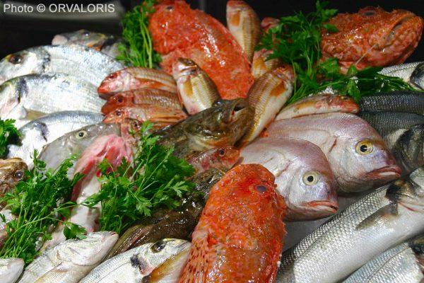 étal de poissons publié dans le Malin Gourmand